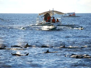 Dolphin & Whale Watching With Island Hopping To Balicasag & Virgin Islands © Boholtours