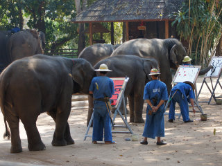 Thai Elephant Conservation Center © stee