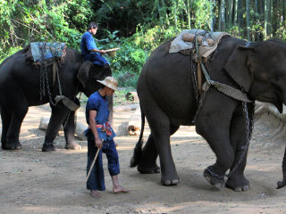 The Elephant Training Center Chiang Dao
