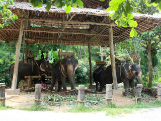 Kok Chang Elephant Trekking Safari