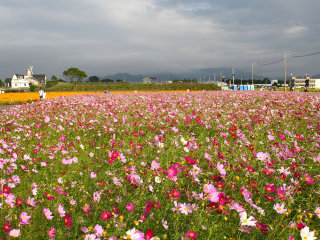 Sea of Flowers in Shinshe