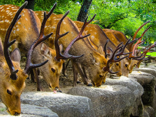 Brilliant Nara Half-Day Itinerary © SteFou!