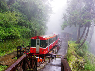 Private Transfer: From Chiayi - Alishan Giant Forest