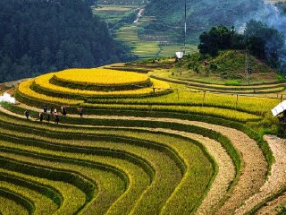 Mu Cang Chai - Sapa 4 days tour