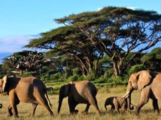 Regional Tours and Safaris