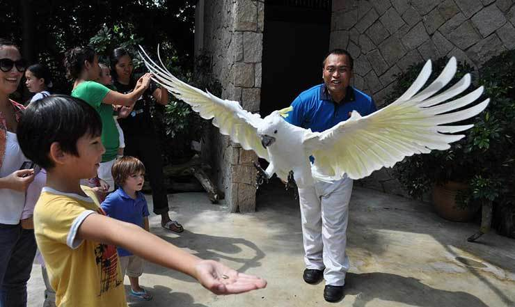 Animal & Bird Encounters - Sentosa