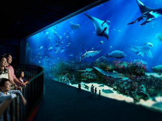 S.E.A Aquarium: Best Singapore Aquarium | Attractions | SENTOSA