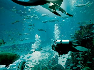 S.E.A Aquarium: Best Singapore Aquarium | Attractions | SENTOSA © Sentosa
