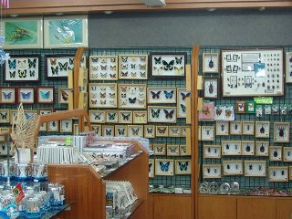 Butterfly Park & Insect Kingdom Retail/Souvenir Shop